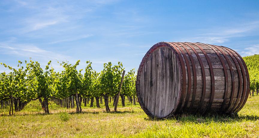 cava's en wijnen uit de streek van onze boomgaard